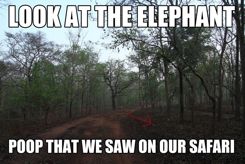 Elephant Happy Birthday Meme Elephants, sloth bears,