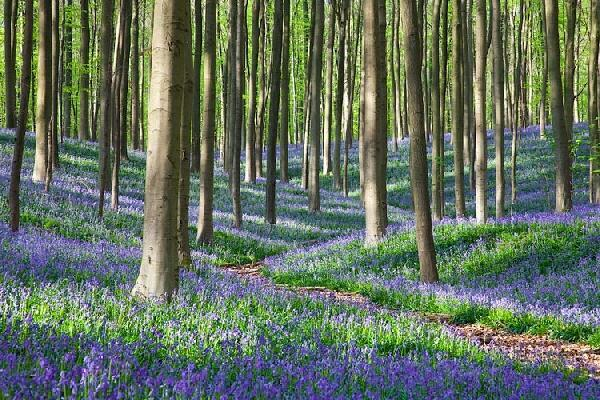 @ademandingwife of Belgium shared this beautiful spring forest path with us: pic.twitter.com/3l0qAObQ93