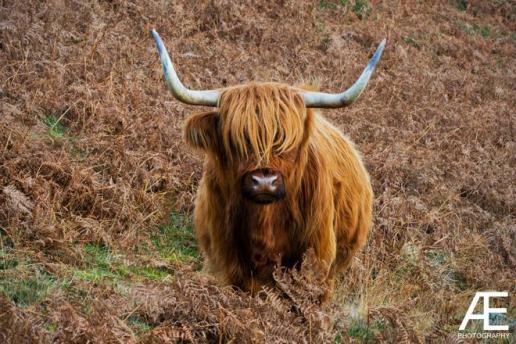Alex Elliott (@AJElliottPhoto) of Scotland makes friends easily when he stays near home: https://twitter.com/AJElliottPhoto/status/534438782804963330/photo/1