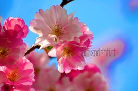 Atul M K (@pixodentist) of the UK captured lovely pinks and blues while looking up: pic.twitter.com/fqUx0o7cDd