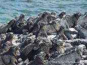 Christine (@ChrisPappinMCC) of the USA caught more than a few of the inhabitants in the Galapagos watching a movie. Or something: https://twitter.com/ChrisPappinMCC/status/501444961531748353/photo/1