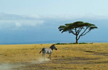 Dani Blanchette (@goingnomadic) of the USA relished in photographing while on safari in Kenya: https://twitter.com/goingnomadic/status/547133955023982592/photo/1