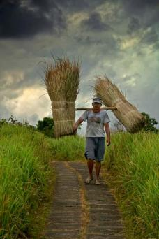 Erick (@PathlessTravels) of Colombia caught this beautifully moody shot of a farmer hard at work during his daily farming routine in Indonesia: pic.twitter.com/IbKXdFMB2P