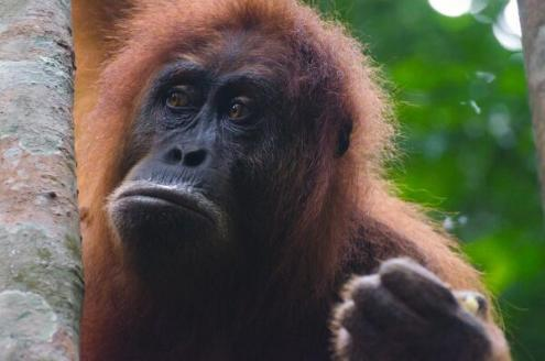 Jeff McAllister (@mcallisterjeff) of Canada took this awesome close-up in Sumatra: http://t.co/r5gmGsBmJQ