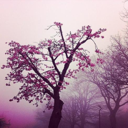 Kirsten Powley (@kpowley) of the UK got a haunting pink sunrise--but it looks pretty darn neat: pic.twitter.com/CpZRNntzS6