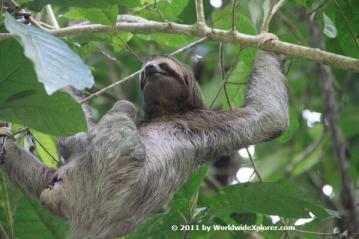 Guest co-host Marisa (@WorldwideXplore) of the USA caught a lovely sloth mid-relaxation in Costa Rica: pic.twitter.com/OvDjqxl1FS