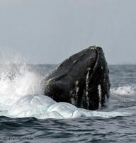Canadian Paul Marshman (@Travel_boomer) must consider his money well-spent, since he captured this amazing whale breaching photo in Mexico. Now THAT'S a treat! pic.twitter.com/5pYNxt4lRn