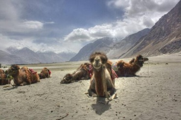 ..and Preshit Shah (@Searchofnirvana) of India got this awesome camel pic in Ladakh: http://t.co/3SsPfv73Zt