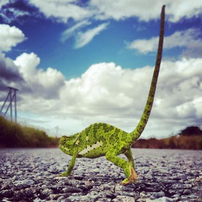 Rory Alexander (@Rory_Alexander) from South Africa dropped in for a chat--and to share some awesome photos, like this cool perspective of a chameleon in his country's national park: https://twitter.com/Rory_Alexander/status/539517870422908929/photo/1