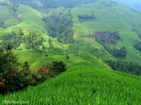 Shara (@SKJtraveler) of the USA loved the textured terraces of China's vibrant green rice fields. Funny enough, so do I: https://twitter.com/SKJtraveler/status/488773279469953025/photo/1