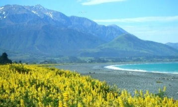 Anja (@travelontoast) of Germany loves New Zealand--and it shows! http://t.co/jjMGGLSpzR