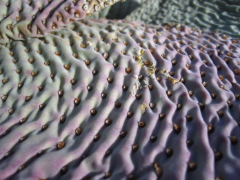 Tamara (@Turtlestravel) of the USA saw unique and colorful folds and valleys in...a cactus! Did you guess it? pic.twitter.com/4cT6uoyRH2