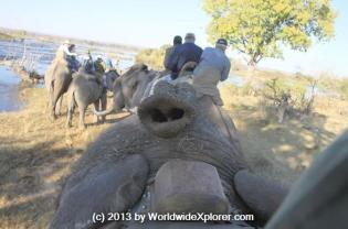 Marisa Meisters (@WorldwideXplore) of the USA caught this funny elephant trunk shot in Zambia: http://ow.ly/i/4kUqZ
