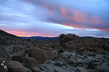 Pink skies over Joshua Tree, right before a storm