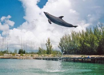 Paul Marshman (@Travel_boomer) of Canada caught this up & away leap from a dolphin in... (location unknown): https://twitter.com/Travel_boomer/status/531914036922028032/photo/1