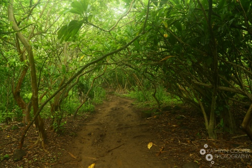 I don't remember the name of this trail as I was too busy eating mangoes